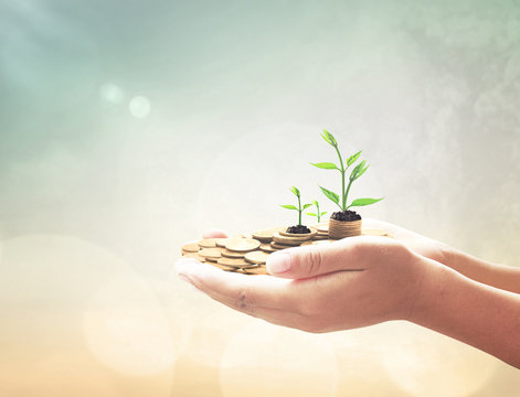 Philanthropy day concept: Entrepreneur hand holding golden coins and small trees over blurred nature background