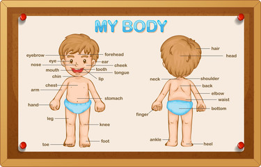 Littly boy and body parts