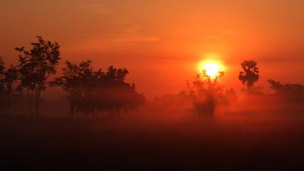 Tree Fog and Sun