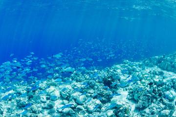 wonderful underwater worl