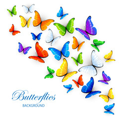 Background with multicolored butterflies