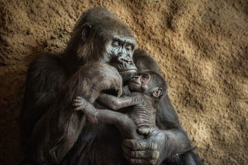Gorilla and its baby