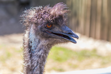 The head of an ostrich. Funny hairstyle.
