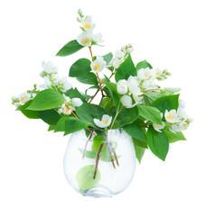 Jasmine flowers and leaves