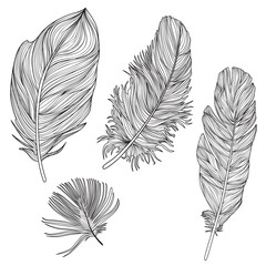 Feather set. Doodle sketch feather collection Birds feather etchning vector
