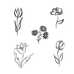 Flower set. Engraved hand drawing floral background design elements Different flowers isolated. Line fine art