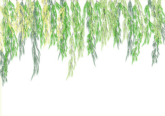 Willow tree branch,weeping tree for object or background,vector illustration