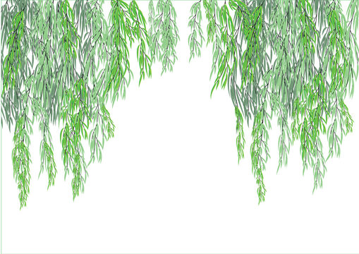 Willow tree branch for background frame