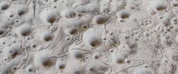 ant lion's  larva hole