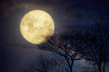 Wall Mural - Milky Way star in night skies, full moon and old tree - Retro style artwork with vintage color tone (Elements of this moon image furnished by NASA)