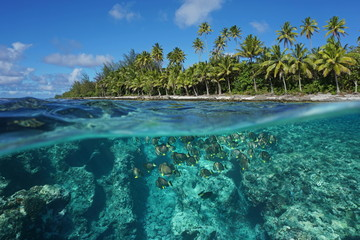 Above and below water surface, tropical shore with coconut trees and the reef with a shoal of fish underwater, Huahine island, Pacific ocean, French Polynesia