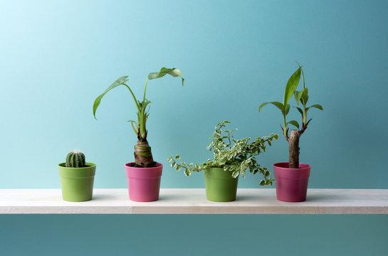 青い背景と観葉植物