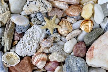 Sea Pebbles With Shells And Starfish