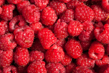 Red raspberries in close up photo
