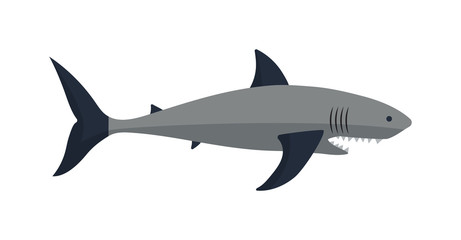 Cartoon shark vector illustration.