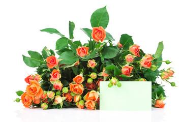 Roses on white background