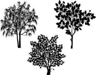 three black foliage trees collection