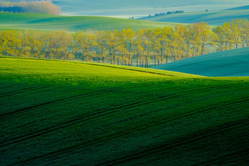 Trees on green wavy hills in South Moravia