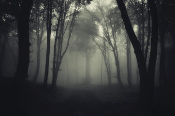 forest in fog with path