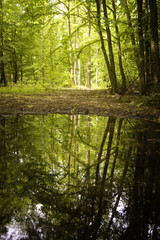 summer forest with lake reflection