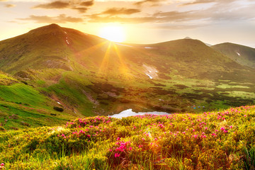 Natural summer scene in Carpathian mountains. Fresh grass, rhododendron flowers glowing last sunlight in evening and mountain lake Nesamovyte. Ukraine, Europe. Wall mural