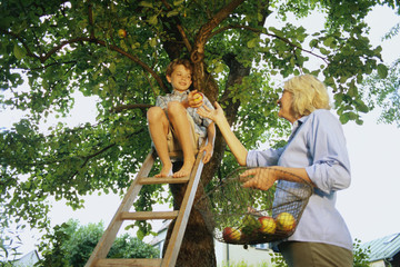 Young boy and woman picking apples from a tree