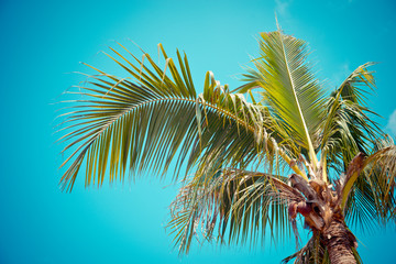 Coconut tree in vintage filter