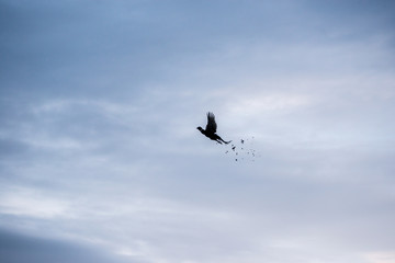Bird flying in sky shedding feathers