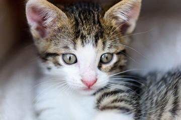 Baby Tabby Cat In Kitty Basket