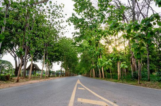 Tall Teak Road