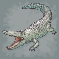 Crocodile, Vector illustration.
