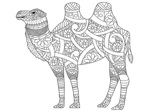 Camel coloring book vector for adults