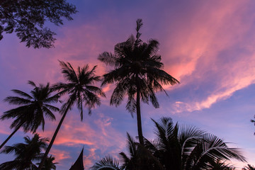 Silhouettes of palm trees against the evening sky.