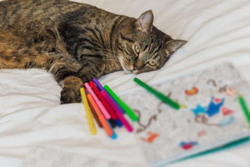 Cat lying down near pencils and adult coloring book