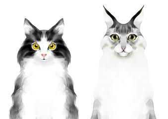 猫の顔 ノルウェージャンフォレストキャットとメインクーン