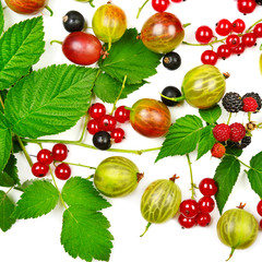 berries black and red currants, gooseberries and blackberries is