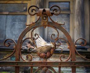 Dead Bird (Thrush / Turdus philomelos)