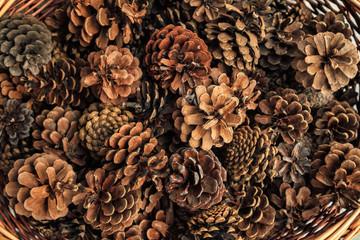 Basketful of pine cones
