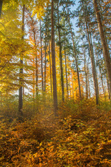Lichtspiel in herbstliche verfärbtem Laubwald mit blauem Himmel