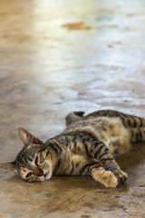 lazy  cat sleep on the floor