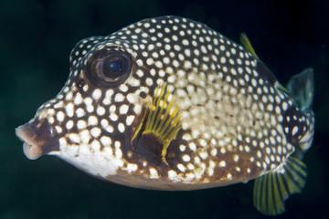 Unterwasser - Riff - Fisch - Kofferfisch - Tauchen - Curacao - Karibik