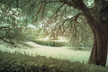 Poster de jardin Olive Stunning infrared alternative color landscape image of trees ove