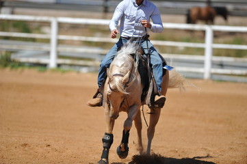 The front view of the rider in leather chaps sliding his horse forward
