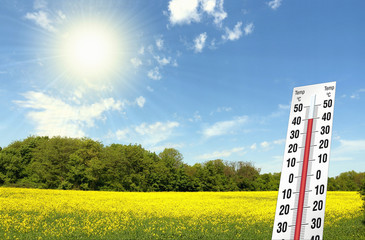 Hitze am Raps Feld bei 40 grad Temperatur am Thermometer, Sonne