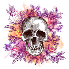 sketch illustration the skull.