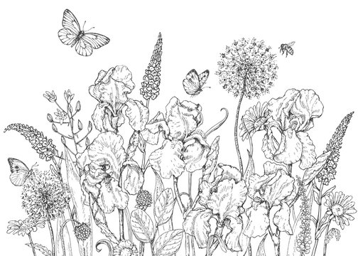 Iris, wild  flowers and insects sketch