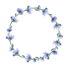 Watercolor wreath with  chicory. Summer flowers for you beautiful design.
