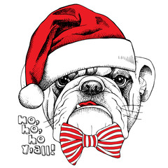Picture of portrait of a dog bulldog in Santa hats with a bow. Vector illustration.