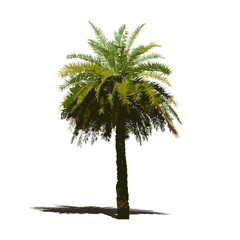 palm tree, natural plant sign, vector illustration on white