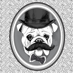 The picture in the frame with image of the dog Bulldog with mustaches in the bowler hat and bow. Vector illustration.
